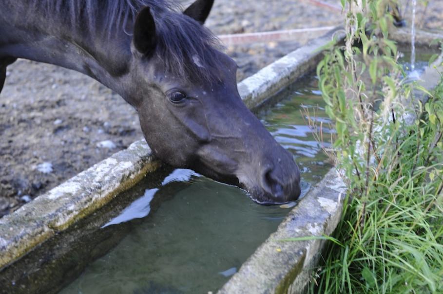 Pferdepension Eggemann - das Wohl des Pferdes hat oberste Priorität
