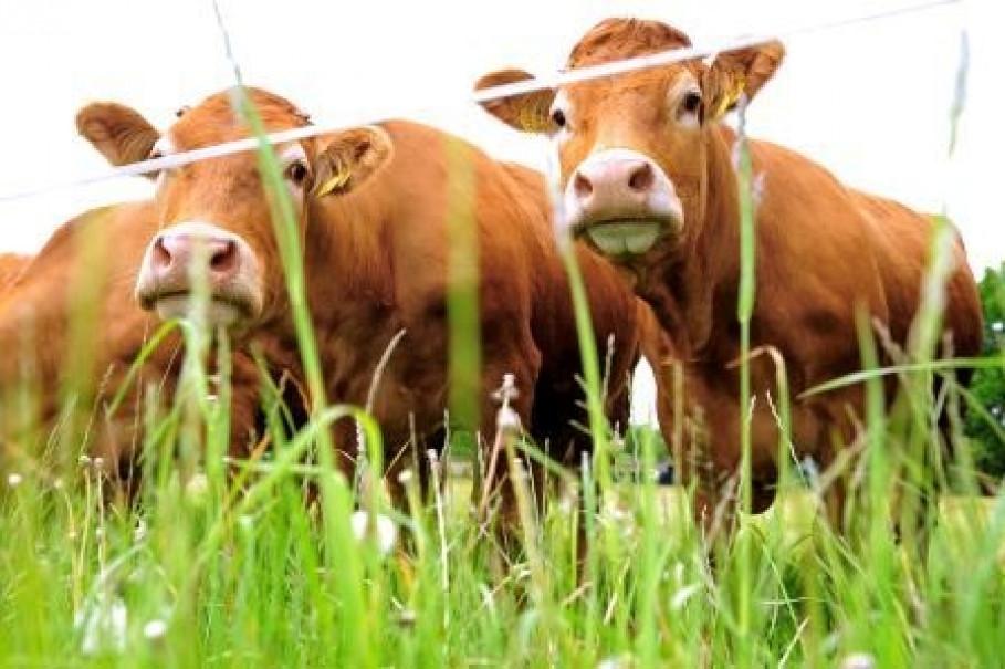 Schulze-Mastrup - Rinderzuchbetrieb, Saerbeck