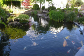 Koi-Teich Grauer in Woringen