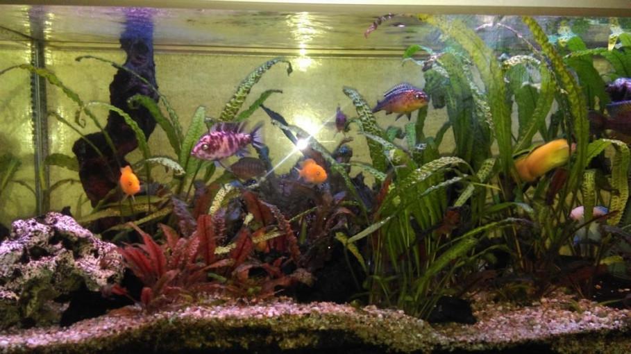 Aquarium Familie Lodes